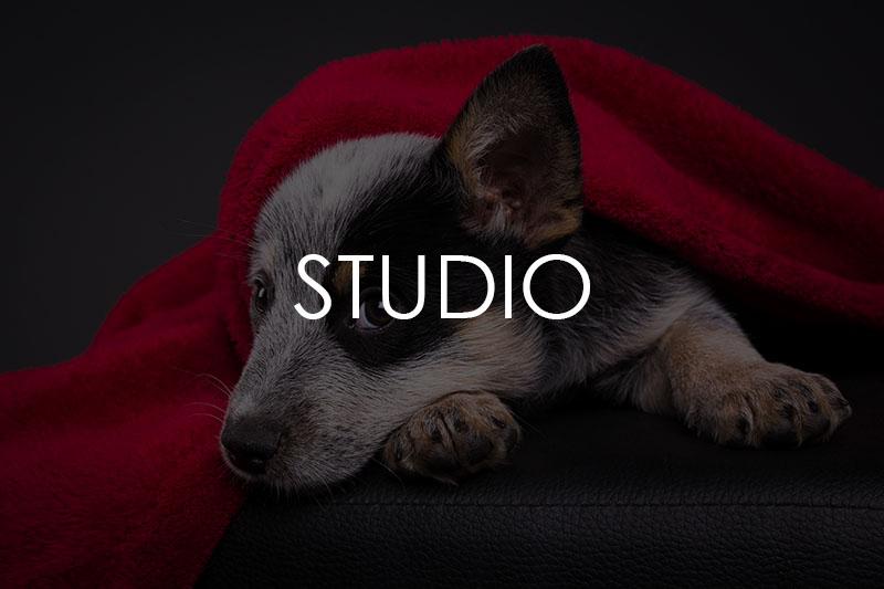 Galerie Hunde im Studio