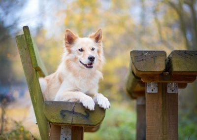 Hund-Bank-liegend-Fotoshooting