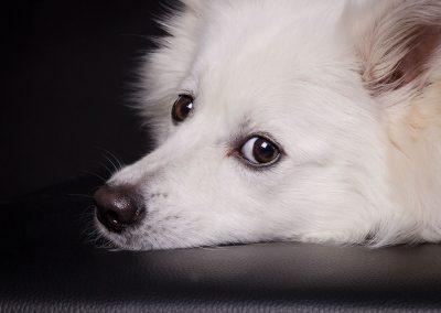 Hund-Hundeblick-Studio