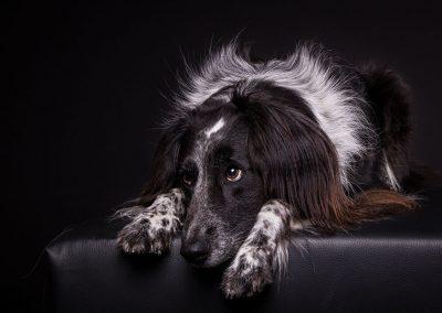 Hund-Hundefotografie-Studio-Tierfotoshooting