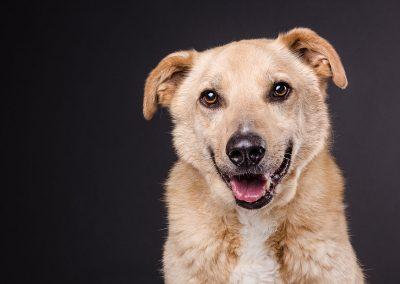 Hund-Mischling-Tierfotograf-Studio-Hessen