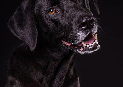 Hund-Mischling-Tierfotografie-Studio