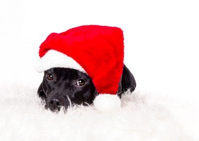 Hund-Nikolausmuetze-Weihnachten-Fotostudio