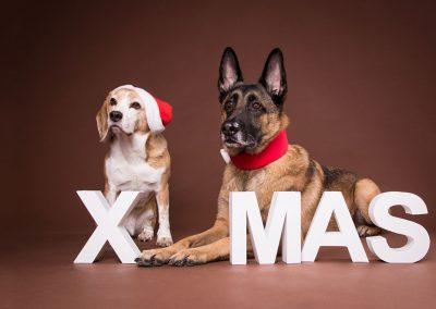 Hunde-Weihnachten-XMAS-braun