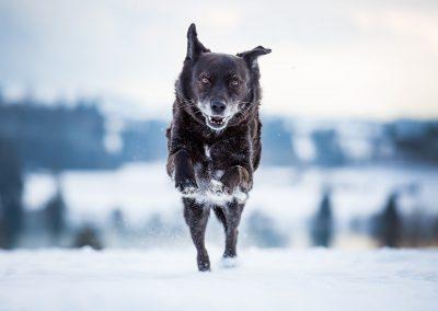 Mischling-Hund-Schnee-rennend