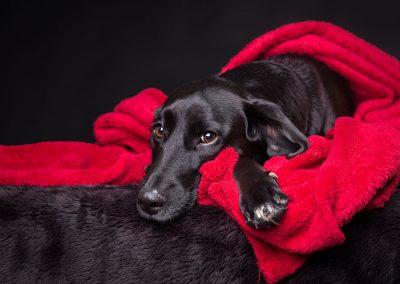 Mischling-Hund-rote-Decke-Studio-schwarz